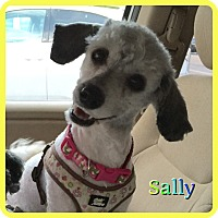 Adopt A Pet :: Sally - Hollywood, FL