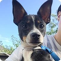 Adopt A Pet :: Bixby - Oakland, CA