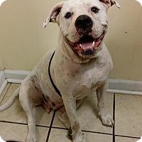 Adopt A Pet :: Nellie - Lawrenceville, GA