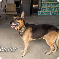 Adopt A Pet :: Denver - Phoenix, AZ