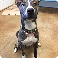 Adopt A Pet :: Boscoe - Wylie, TX