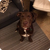Adopt A Pet :: Buford - Las Cruces, NM