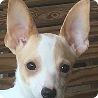 Adopt A Pet :: Yota - Staunton, VA