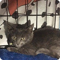 Adopt A Pet :: Ivy - East Brunswick, NJ