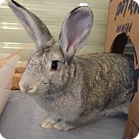 Adopt A Pet :: Hawkins - Watauga, TX