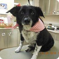 Adopt A Pet :: Artie - Wildomar, CA