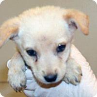 Adopt A Pet :: Donnie - Wildomar, CA