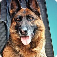 Adopt A Pet :: SHELLIE VON SCHRAPLAU - Los Angeles, CA