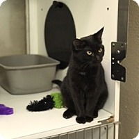 Adopt A Pet :: Daisy - Leawood, KS