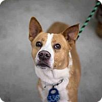 Adopt A Pet :: BRONCO - Bonita, CA