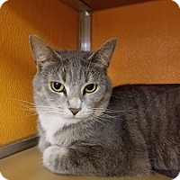 Adopt A Pet :: Savannah - Elyria, OH