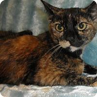 Adopt A Pet :: Annato - Highland Park, NJ