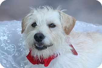 Terrier (Unknown Type, Small)/Terrier (Unknown Type, Medium) Mix Dog for adoption in san diego, California - Duffy