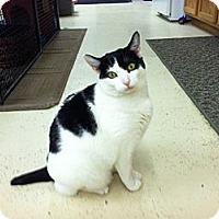 Adopt A Pet :: Boo Boo - North Branford, CT