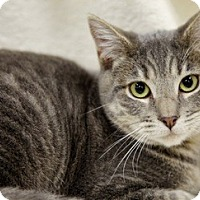 Adopt A Pet :: Sophie - Fremont, CA