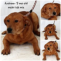 Adopt A Pet :: Andrew - Evansville, IN