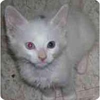 Adopt A Pet :: Hash Brown - Davis, CA