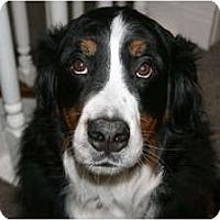 Adopt A Pet :: Dazy - Rigaud, QC