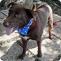 Adopt A Pet :: Butch - Hop Bottom, PA
