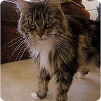 Adopt A Pet :: Piper - Alexandria, VA