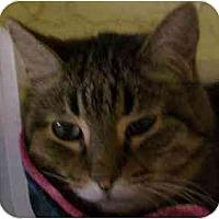 Adopt A Pet :: Chic - Lombard, IL