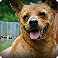 Adopt A Pet :: Malessa - Vancleave, MS