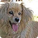 Adopt A Pet :: Lucky