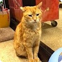 Adopt A Pet :: Morris - Colmar, PA