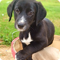 Adopt A Pet :: *Graham - PENDING - Westport, CT