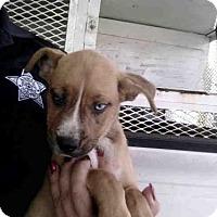 Adopt A Pet :: A257108 - Conroe, TX