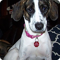 Adopt A Pet :: Penny *In Foster* - Appleton, WI