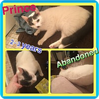 Adopt A Pet :: Prince - Brentwood, NY