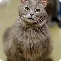 Adopt A Pet :: Chips160096 - Atlanta, GA