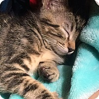 Adopt A Pet :: BunBun - Orange, CA