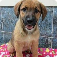 Adopt A Pet :: Rita - Bartonsville, PA
