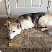 Adopt A Pet :: Jax(CL) - Greensboro, NC