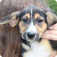 Adopt A Pet :: Cheddar - Harmony, Glocester, RI