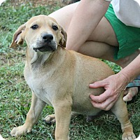 Adopt A Pet :: Skipper - Knoxville, TN