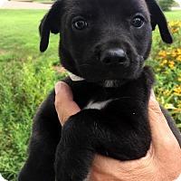 Adopt A Pet :: Nadine - Danbury, CT