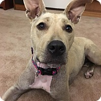 Adopt A Pet :: Chrissy Snow - West Allis, WI