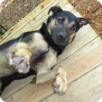 Hound (Unknown Type) Dog for adoption in Hamilton, Georgia - Samson