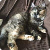Adopt A Pet :: Faith - McHenry, IL