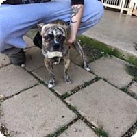 Adopt A Pet :: GRIMM - Elk Grove, CA