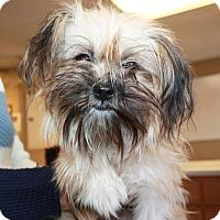 Adopt A Pet :: Pixie - Sparta, NJ