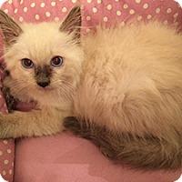 Adopt A Pet :: Sumo - Metairie, LA