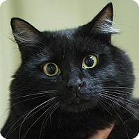 Adopt A Pet :: RICKY - Decatur, GA