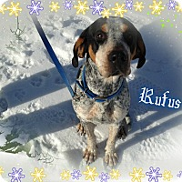 Adopt A Pet :: Rufus is ADOPTED! - Buffalo, IN