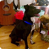 Adopt A Pet :: Lucky - Harrison, NY
