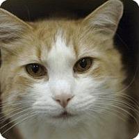 Adopt A Pet :: Morgan - New York, NY
