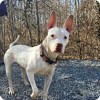 Adopt A Pet :: Ricky - Greensboro, NC